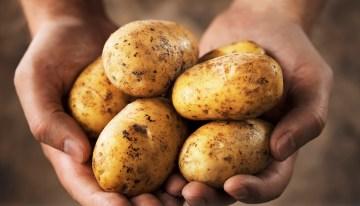 Random Fact: Tuberculosis and Potatoes