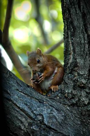 promenade-caleches-camargue-ecureuil
