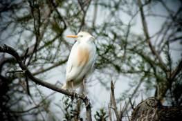 promenade-caleches-camargue-oiseaux