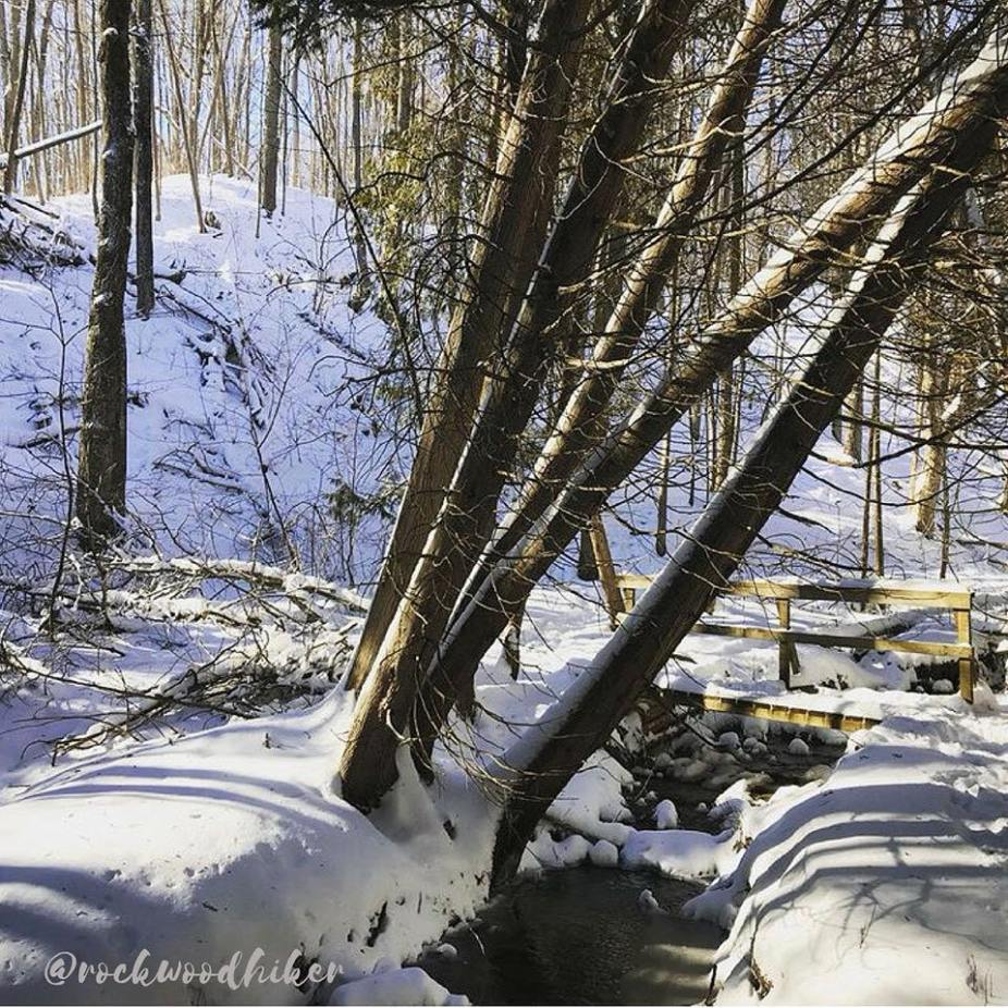 Winter Scene in Hockley Valley