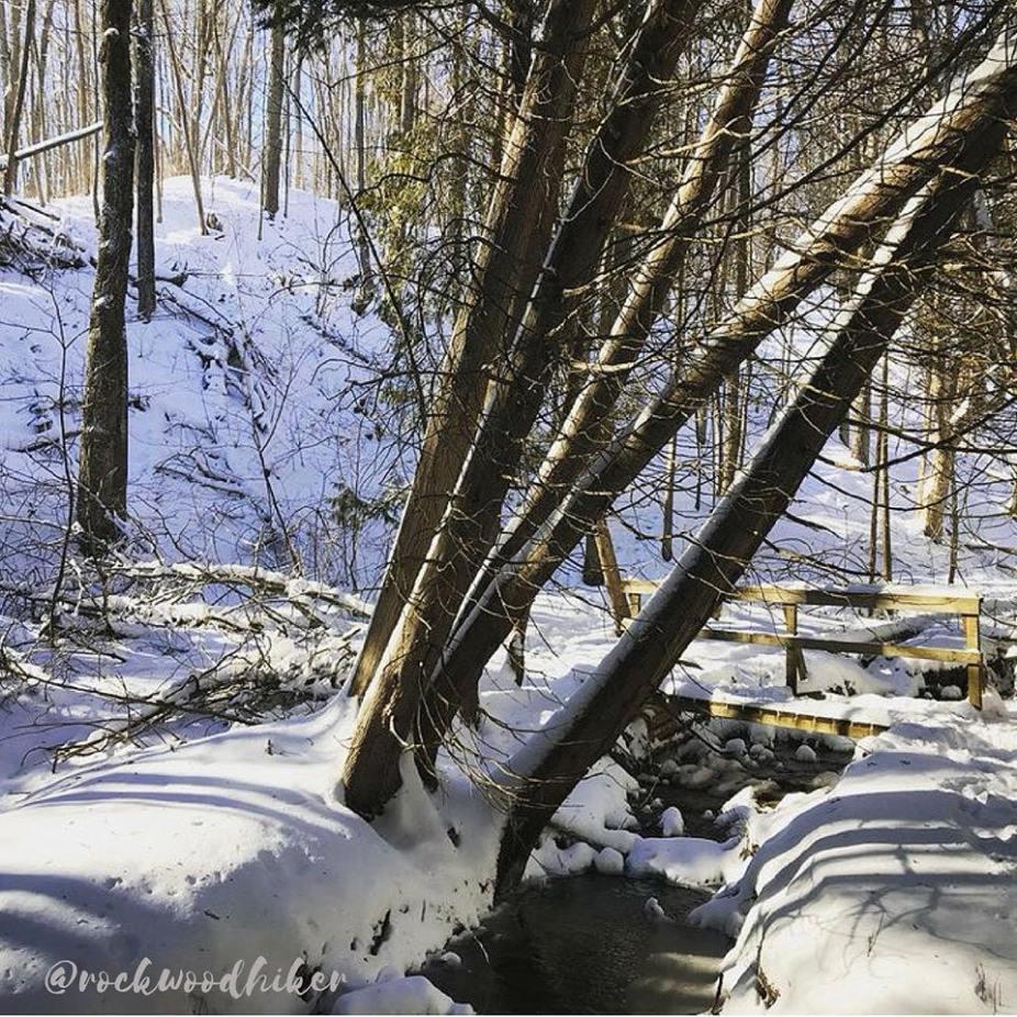 Winter Scene in Hockley Valley
