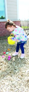 Briana Gallo, 2, of Georgetown was having no trouble finding Easter eggs during the hunt. Photos by Bill Rea