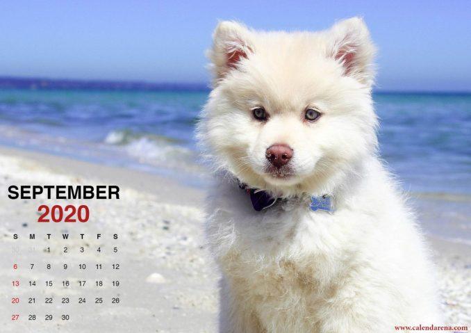 Calendar September 2020 little puppy