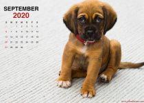 Kalender 2020 september kleiner Welpe