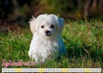 calendario septiembre 2020 con cachorros