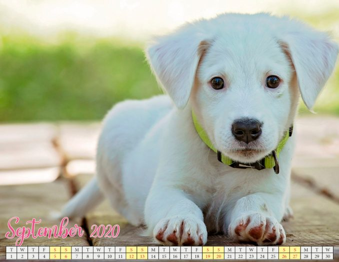 september 2020 calendar with puppies5