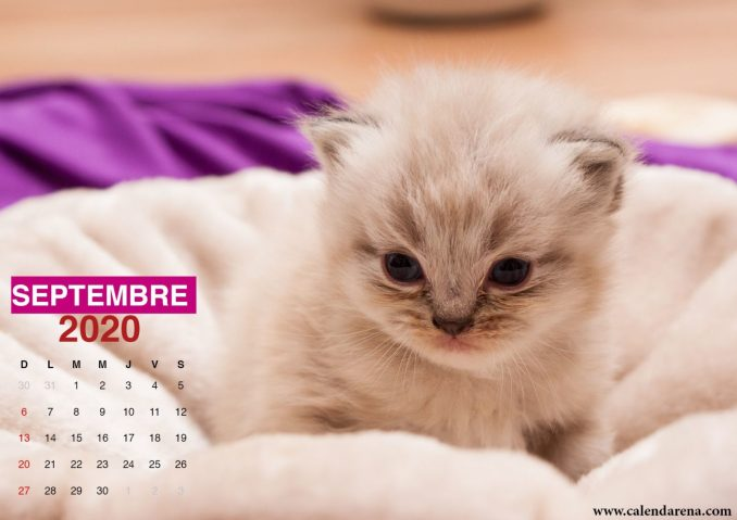 wallpaper calendrier septembre 2020 chiots5