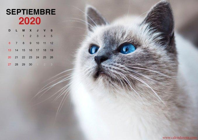 wallpaper de gatito para el calendario de septiembre de 2020