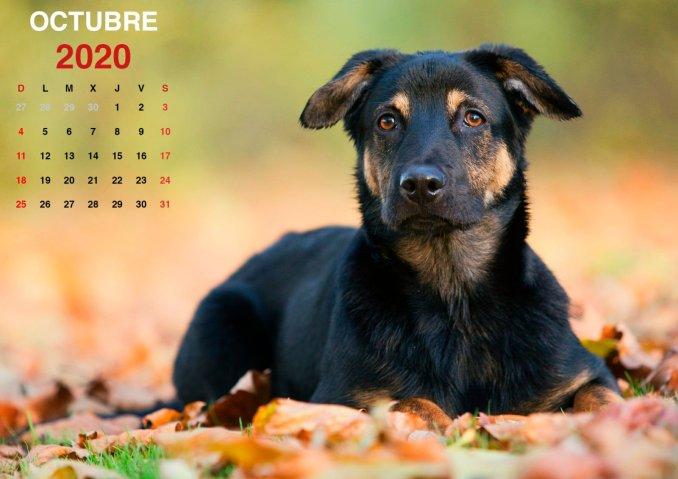 Calendario octubre 2020 imprimible