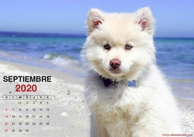 Hoja de calendario septiembre 2020 perrito