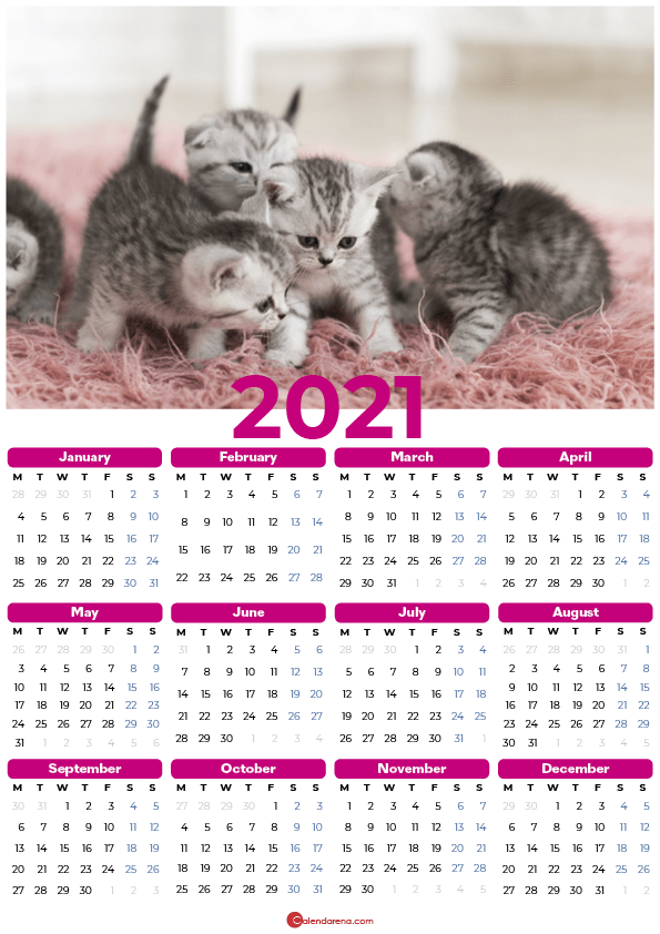 cats 2021_pink