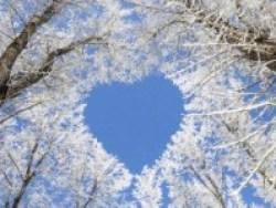 calendrier lunaire arbre coeur