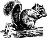 calendrier lunaire ecureuil
