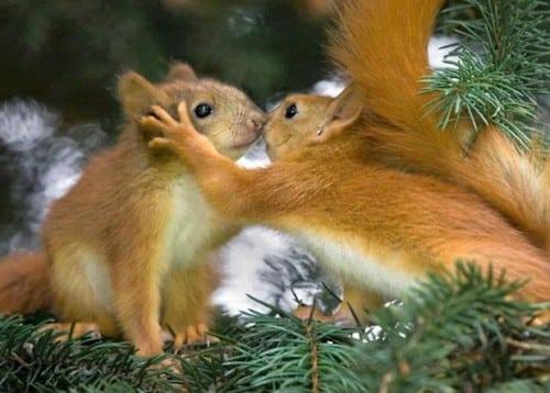 calendrier lunaire janvier 2016 écureuil bonne année