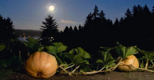 calendrier lunaire jardiner avec la lune potiron nuit