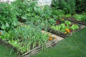 calendrier lunaire petit jardin