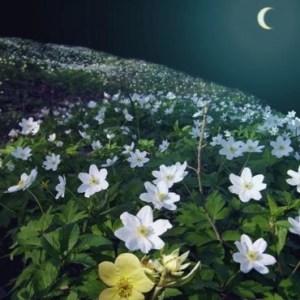 le calendrier lunaire nature fleurs