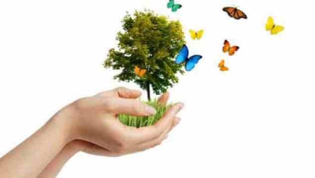 calendrier lunaire permaculture developpement durable