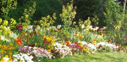 calendrier lunaire fleurs annuelles