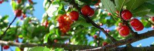calendrier lunaire jardiner avec la lune juin 2016