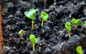 calendrier lunaire - jardiner avec la lune 2021 - avril