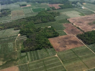 Detest the Pest: County Antes Up to Help Ag Battle Insects, Weeds
