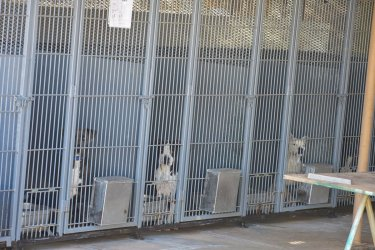 Border Paws Nears Goal to Improve Animal Shelter
