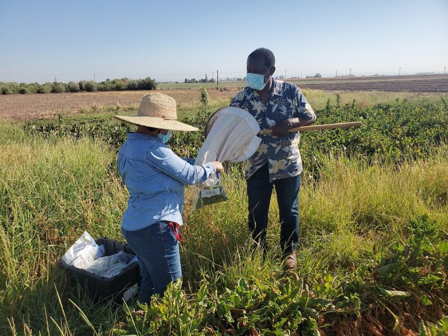 Oli Bachie Completes Two-Year Insecticide Study