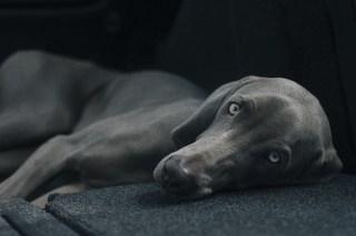 image-relaxed-dog