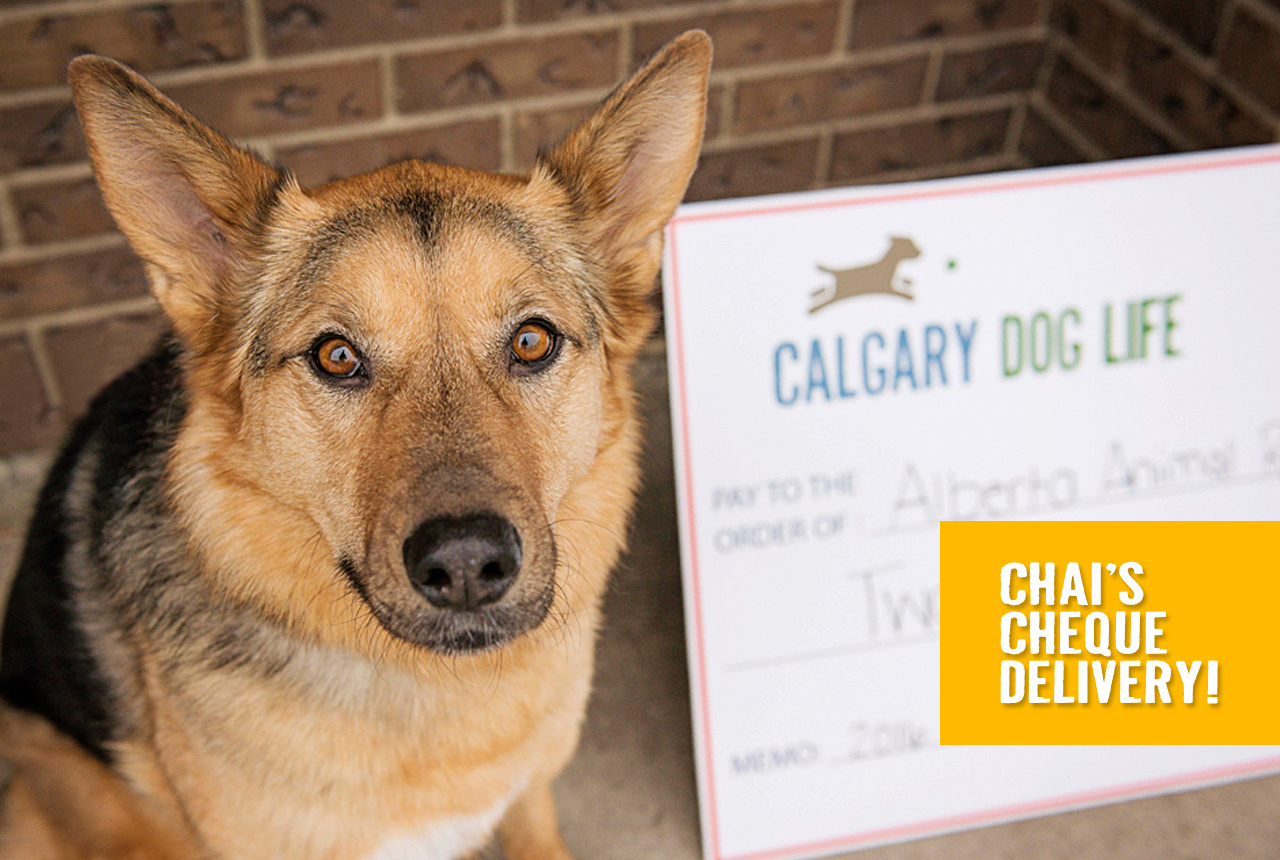 Giving Back to Support Calgary Dogs