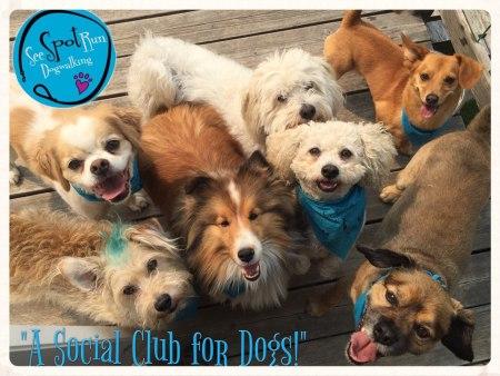 see-spot-run-blog-calgary-dog-walking-business