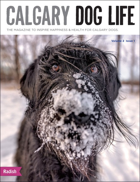 dog mag in calgary alberta all things dog in YYC