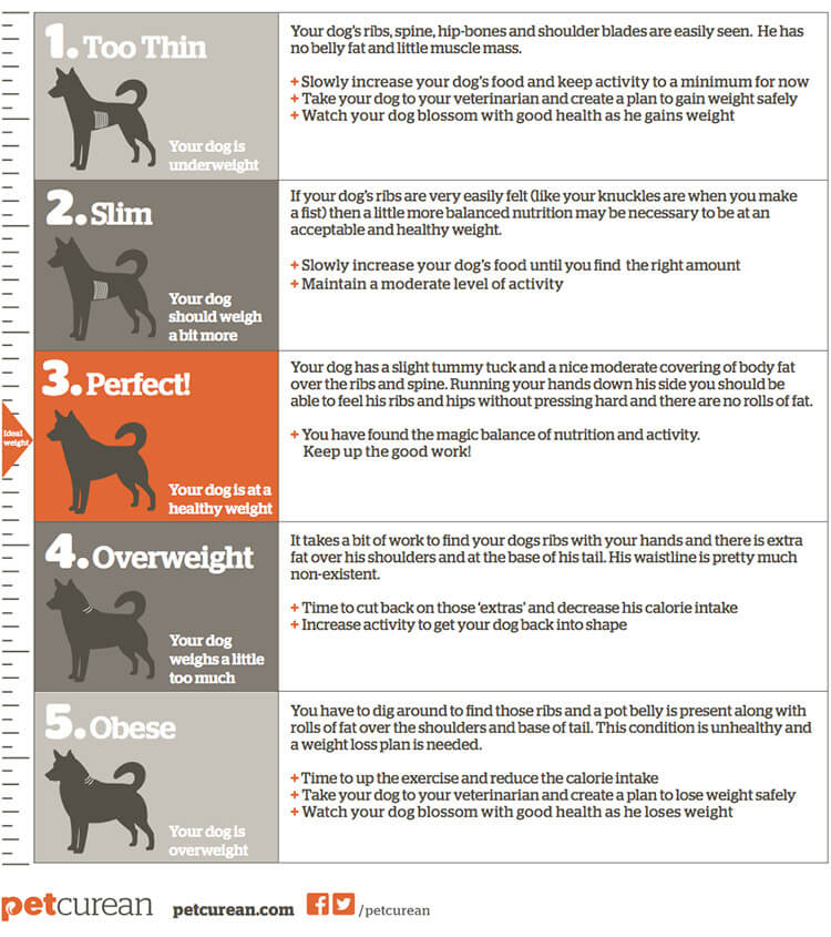 calgary dogs body weight info