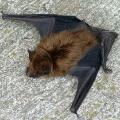 thumb Bat_Main