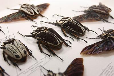 beetleedit