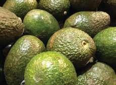 thumb avocado