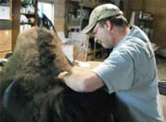JOBS lima taxidermist thumb