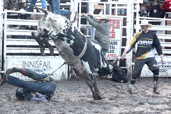 The rodeo team takes over when a bull rider hits the ground at the Innisfail rodeo on June 15. Photo by Casey Richardson.