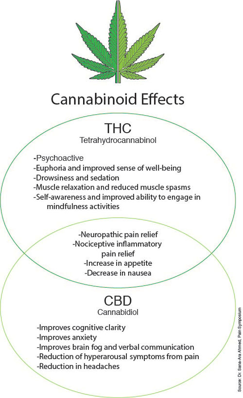 Cannabinoid Effects: THC vs. CBD