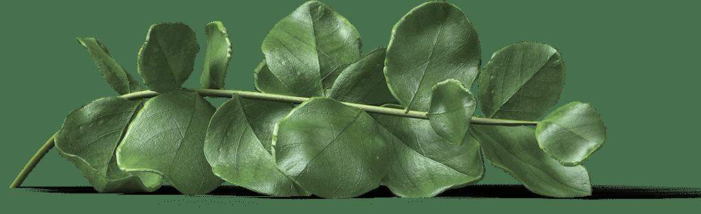 hojas para slider decoracion