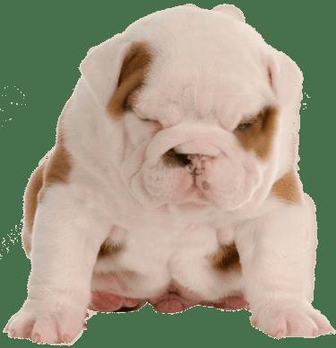 diarrea en cachorros