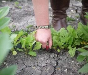 Pepper Creek Farms Picking by Liz Dodder