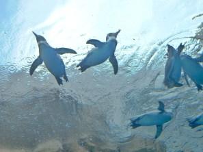 penguin-light swim