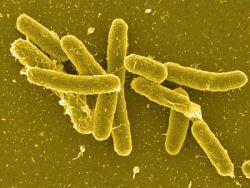 Salmonella data