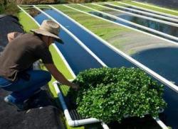 From Service to Harvest – Military Veteran Deploys Aquaponics on the Farm