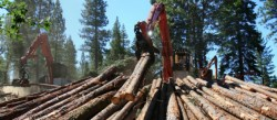 Housing Market Recovery Helps Timber Producers