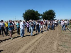 Fresno State Plant Science Students Earn top Honors at UC Davis Weed Day