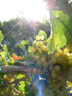 U.S. Will be first Country of Honor for Wine in Vinexpo 2015