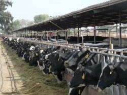 Dairyman Cuts Diesel Emissions 92%