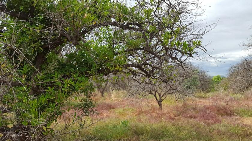 Abandoned Citrus